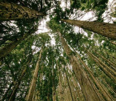 Entretien des forêts et des pistes à Clermont l'Hérault